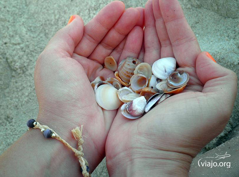 Souvenirs - Caracoles en la Playa