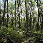 Sendero Laguna Esmeralda - Bosque Nativo de Lengas